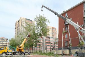 北京某大学树木养护案例