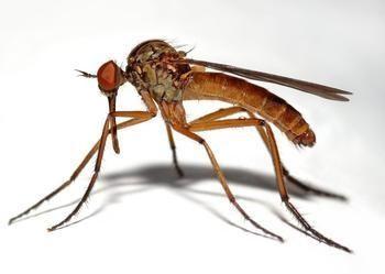 盛夏到来,怎么对付讨厌的蚊子